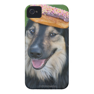 Mixed breed shepherd with donut on head Case-Mate iPhone 4 cases
