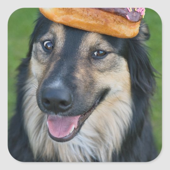 Mixed breed shepherd with donut on head square sticker