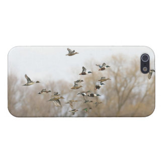 Mixed Ducks iPhone 5 Cover - Savvy