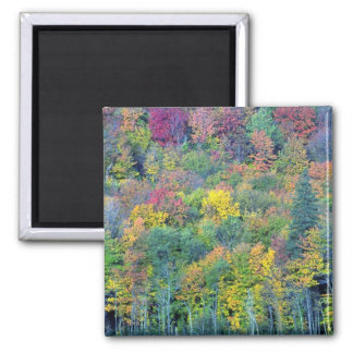 Mixed hardwood forest Gatineau Park Quebec Cana Fridge Magnet