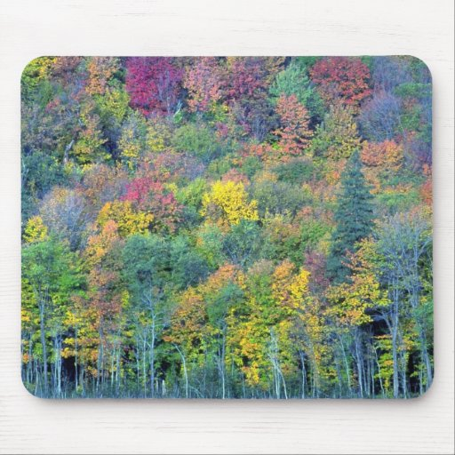 Mixed hardwood forest, Gatineau Park, Quebec, Cana Mouse Pad