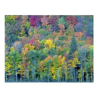 Mixed hardwood forest, Gatineau Park, Quebec, Cana Postcard