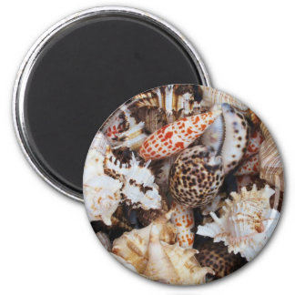 Mixed Seashells for the Sea Shore Lover 2 Inch Round Magnet
