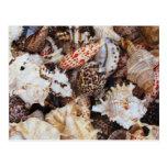 Mixed Seashells for the Sea Shore Lover Postcard