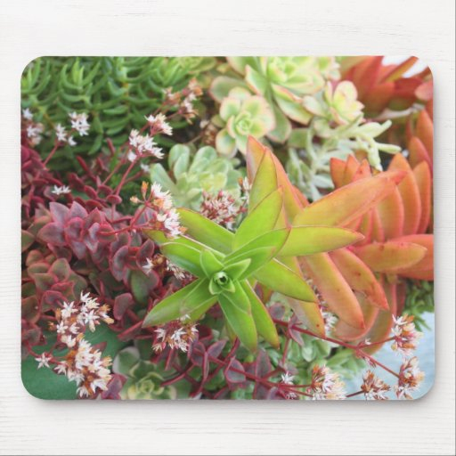 Mixed succulents mousepad