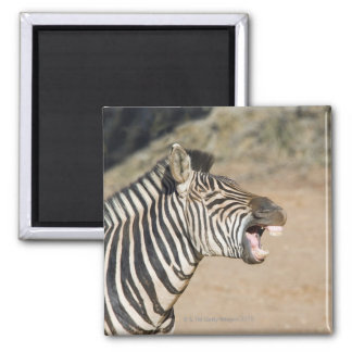 Mkuze Game Reserve, Kwa-Zulu Natal Province, 2 Inch Square Magnet