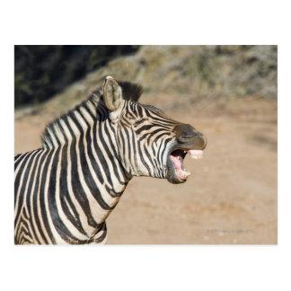 Mkuze Game Reserve, Kwa-Zulu Natal Province, Postcard