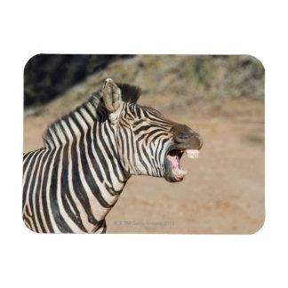Mkuze Game Reserve, Kwa-Zulu Natal Province, Rectangular Photo Magnet