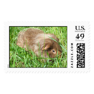 Mmmm grass postage stamps