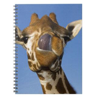 Mmmm Mmmmm bueno Spiral Notebook