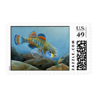 MO 2008 Jenkins 1721 high064 Postage Stamp