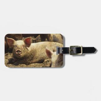 MO: Ste Genevieve, pig farm Bag Tag