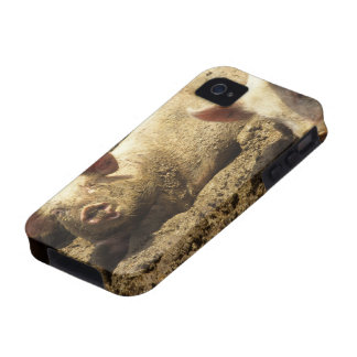 MO: Ste Genevieve, pig farm Case-Mate iPhone 4 Cases