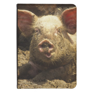 MO: Ste Genevieve, pig farm Kindle Touch Cover