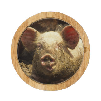MO: Ste Genevieve, pig farm Cheese Board
