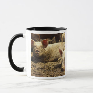 MO: Ste Genevieve, pig farm Mug