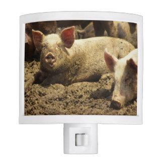 MO: Ste Genevieve, pig farm Night Light