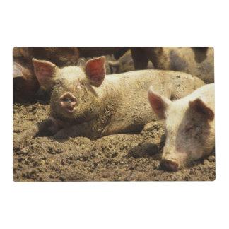 MO: Ste Genevieve, pig farm Placemat