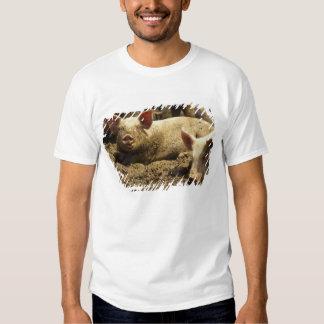 MO: Ste Genevieve, pig farm T-Shirt