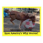 Moccasin's HOPE - save Wild Horses & Burros Post Cards