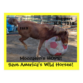 Moccasin's HOPE - save Wild Horses & Burros Postcard