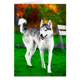 Mocha The Husky In Fall Card