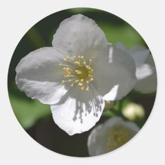 Mock Orange Blossom Classic Round Sticker