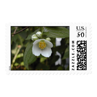Mock Orange Blossom Stamp