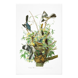 Mocking Bird John James Audubon Birds of America Stationery