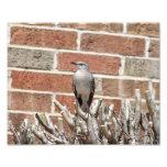 Mocking Bird on Bush in Front of Brick Building Photo