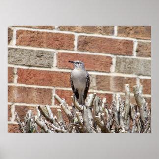 Mocking Bird On Sticks With Brick Background Poster