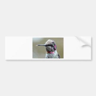 Mocking Hummingbird Bumper Sticker