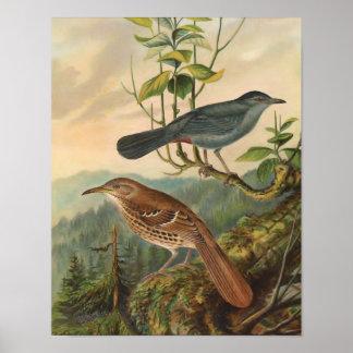Mockingbird and Brown Thrasher Poster