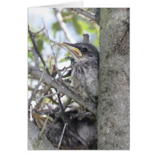 Mockingbird baby card
