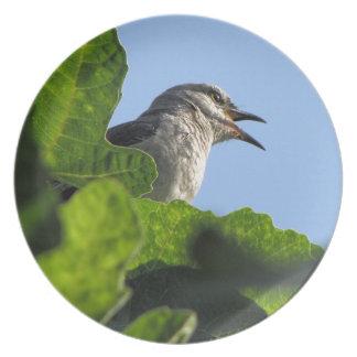 Mockingbird bonito plato