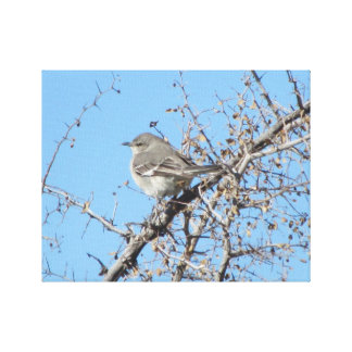 Mockingbird Canvas Print