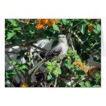 Mockingbird en Lantana Tarjeton