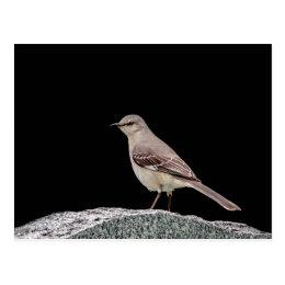 Mockingbird on a tombstone postcard