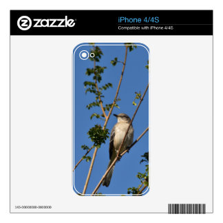 Mockingbird on Branch Decals For The iPhone 4