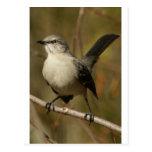 Mockingbird Ornithology Post Card