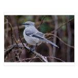 Mockingbird Ornithology Post Cards