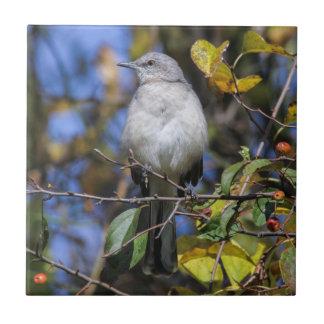 Mockingbird septentrional azulejo cuadrado pequeño