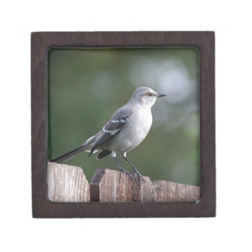 Mockingbird septentrional caja de joyas de calidad