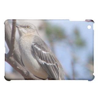 Mockingbird septentrional
