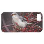 Mockingbird septentrional iPhone 5 cárcasas