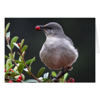 Mockingbird septentrional - Joe Sweeney - tarjeta