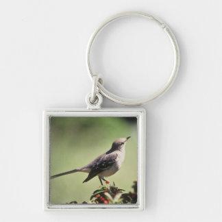 Mockingbird septentrional llavero cuadrado plateado
