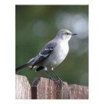 Mockingbird septentrional membrete