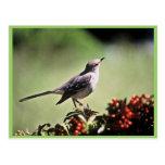 Mockingbird septentrional postal
