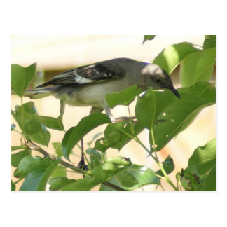 Mockingbird Postales